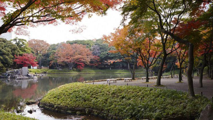 Disfruta del máximo esplendor de las galas otoñales con las que se visten los árboles de Tokio