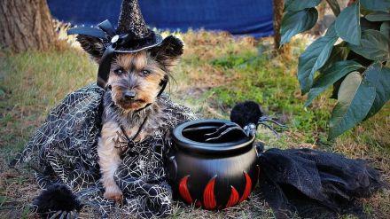 Halloween y su desconocido origen irlandés