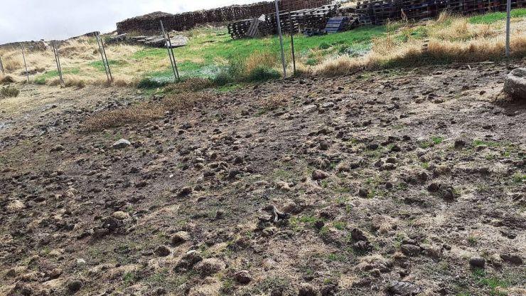 WWF denuncia graves impactos sociales por parte de la granja peletera de Peguerinos
