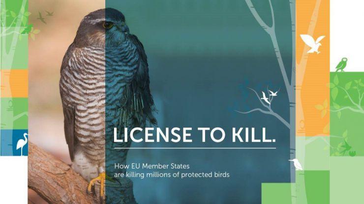 14 millones de aves mueren por 'excepciones'