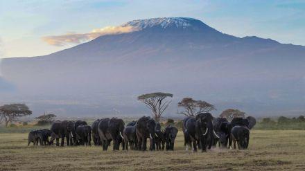 África Oriental: Salvaje, majestuosa, exuberante