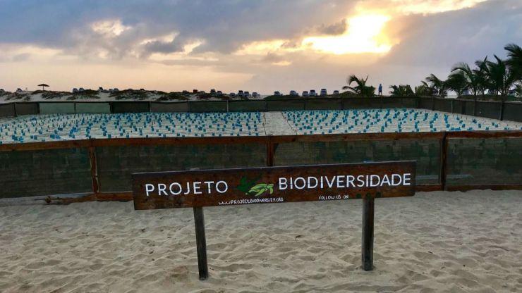 Récord histórico de nidos de tortuga en Cabo Verde