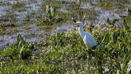 Día Mundial de los Humedales: 50 años del Convenio de Ramsar