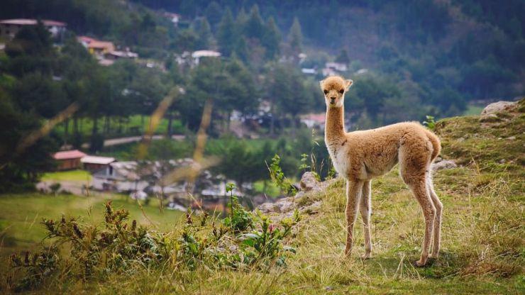 Perú enfoca su reactivación turística en su oferta de experiencias únicas al aire libre