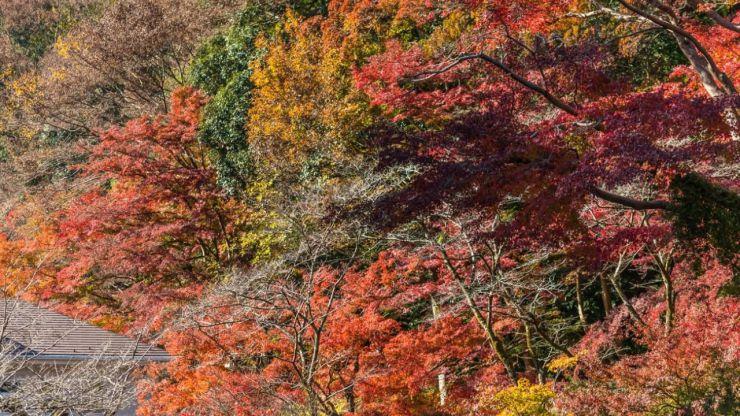 Tokio: De ciudad polifacética y cosmopolita a su inmensa naturaleza