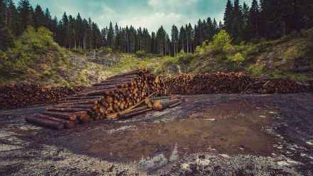 ¿Qué tiene que ver la deforestación de la Amazonia con la proliferación de bacterias resistentes a los antibióticos?
