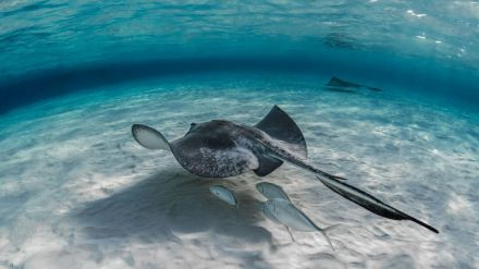 Canarias: Deporte en el agua para los más aventureros