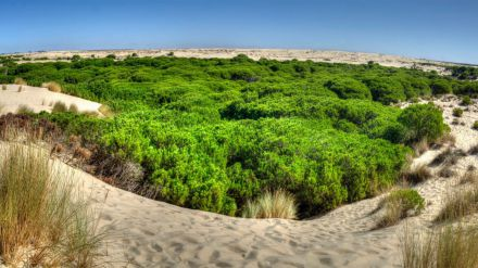 España tendrá que cumplir 15 recomendaciones de la Unesco ante el mal estado de Doñana