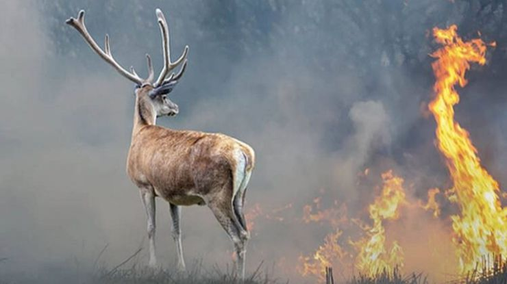La zona mediterránea una de las regiones con mayor riesgo mundial de incendios por el cambio climático