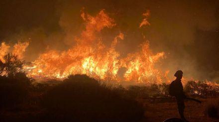 WWF pide al Gobierno un plan de restauración integral y participativo tras los incendios