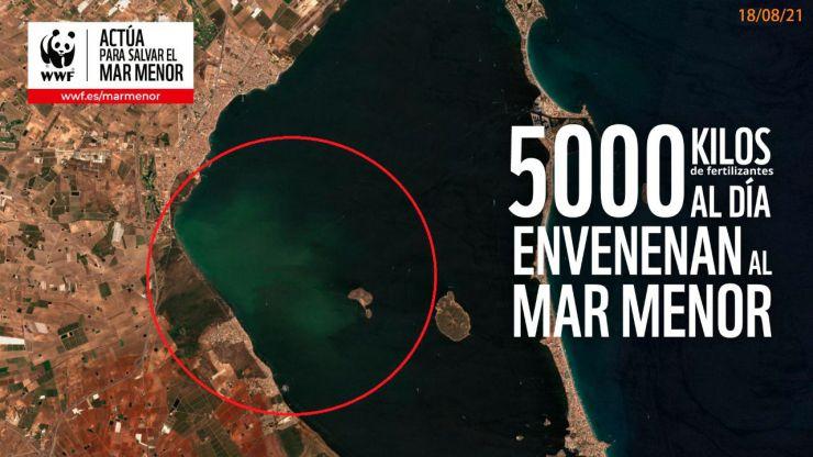 La vegetación del Mar Menor empieza a morir