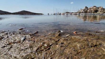 El Mar Menor al borde de la desaparición
