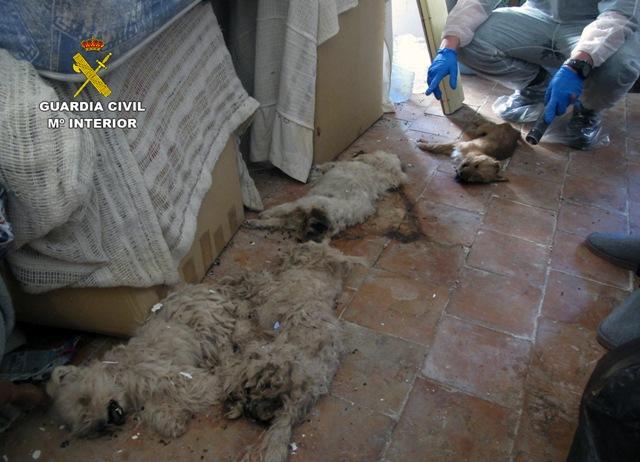 Un murciano convivía con un centenar de animales en nefastas condiciones e incluso con algunos muertos