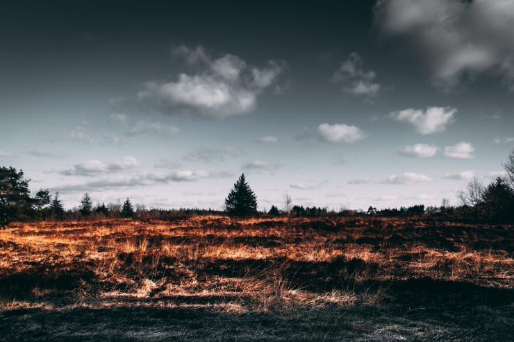 La deforestación ha arrasado en los últimos 13 años una superficie equivalente a California
