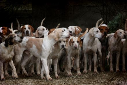Del kaos al logos (XVIII): Animal grupal