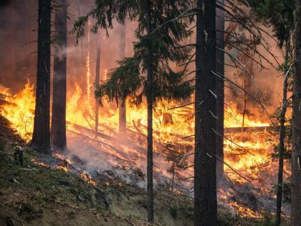 El incendio de Gavilanes (Ávila) quemó más de 1.400 hectáreas