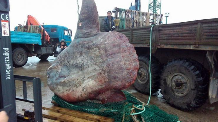 Monstruos marinos con los que no querrías cruzarte